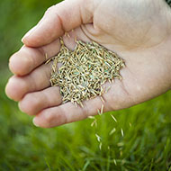 St Louis Lawn Seeding Services