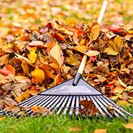 St Louis Leaf Removal Services