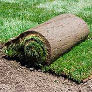 St Louis Sod Installation Services