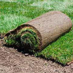 Sod Placement